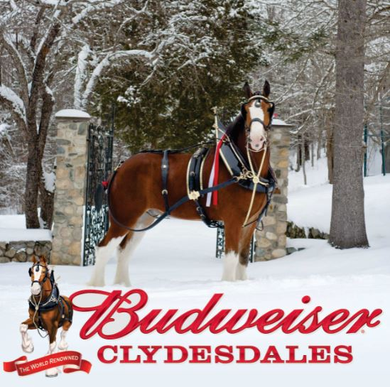 World Renowned Budweiser Clydesdales to Visit Ocean Springs